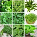Các loại rau thơm và cách dùng của chúng - Bạn đã biết chưa?