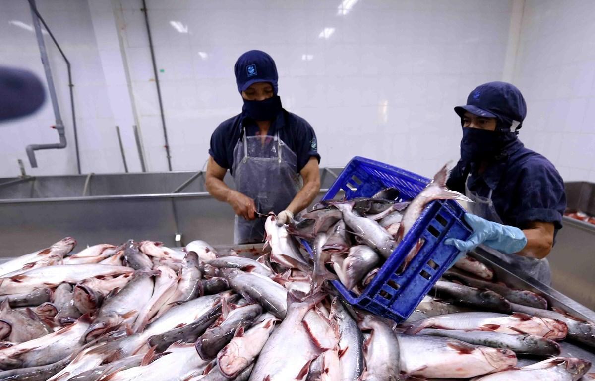 Thuê mướn nhân công làm sạch cá